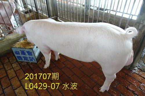 中央畜產會201707期L0429-07拍賣照片