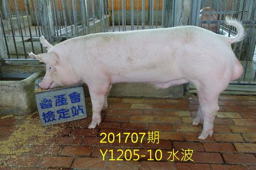 中央畜產會201707期Y1205-10拍賣照片
