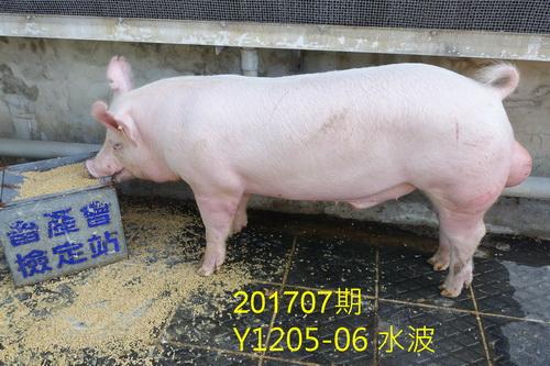 中央畜產會201707期Y1205-06拍賣照片