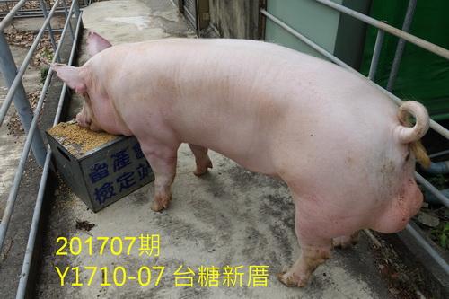 中央畜產會201707期Y1710-07拍賣照片