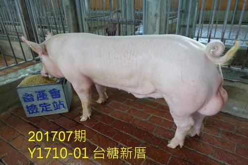 中央畜產會201707期Y1710-01拍賣照片
