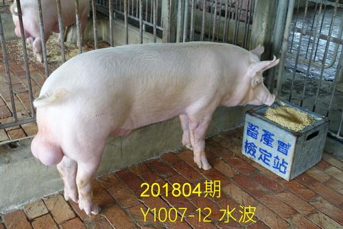中央畜產會201804期Y1007-12拍賣照片
