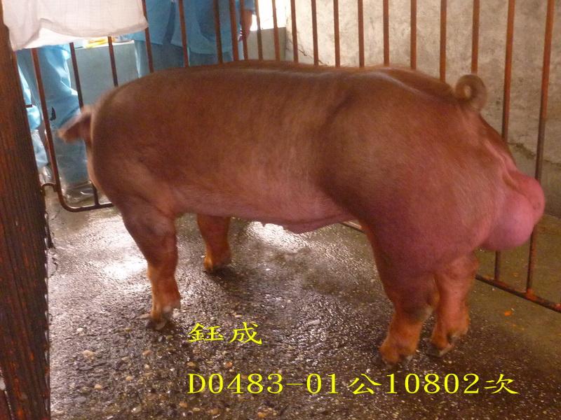台灣區種豬產業協會10802期D0483-01側面照片