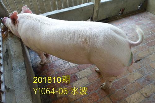中央畜產會201810期Y1064-06拍賣照片