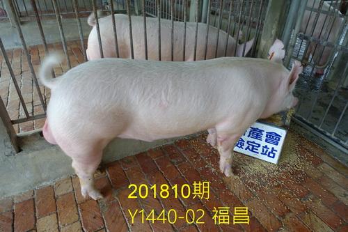 中央畜產會201810期Y1440-02拍賣照片