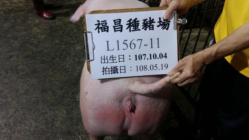 台灣區種豬產業協會10805期L1567-11後側相片