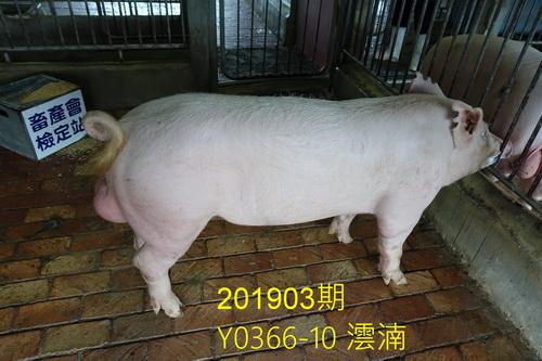 中央畜產會201903期Y0366-10拍賣照片