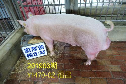 中央畜產會201903期Y1470-02拍賣照片