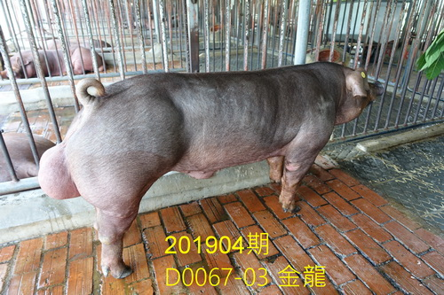 中央畜產會201904期D0067-03拍賣照片
