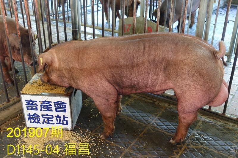 中央畜產會201907期D1145-04拍賣照片