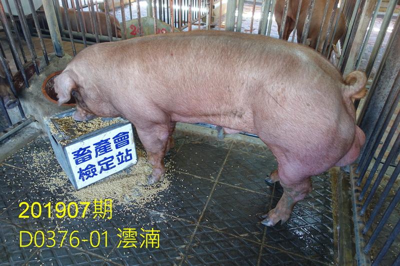 中央畜產會201907期D0376-01拍賣照片