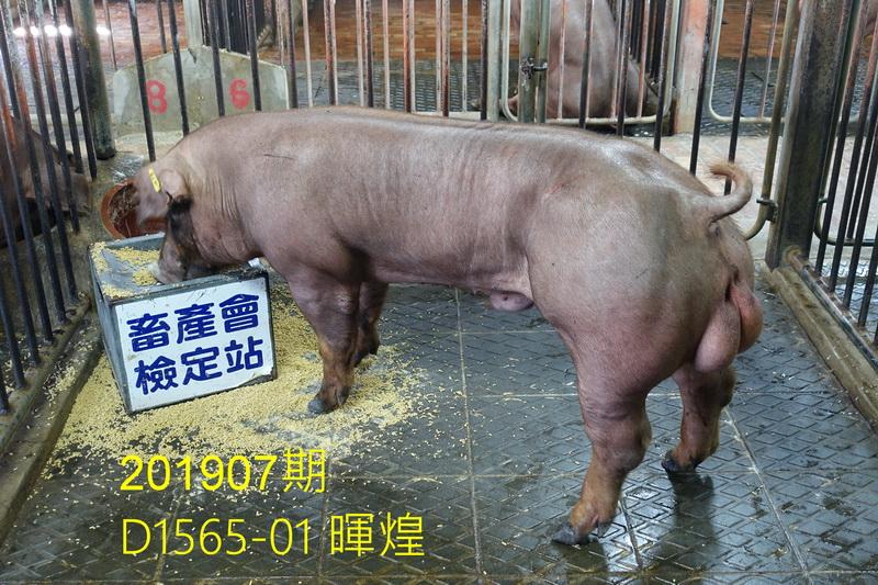 中央畜產會201907期D1565-01拍賣照片