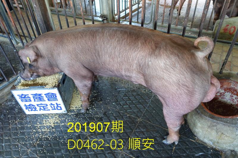 中央畜產會201907期D0462-03拍賣照片