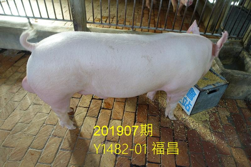 中央畜產會201907期Y1482-01拍賣照片