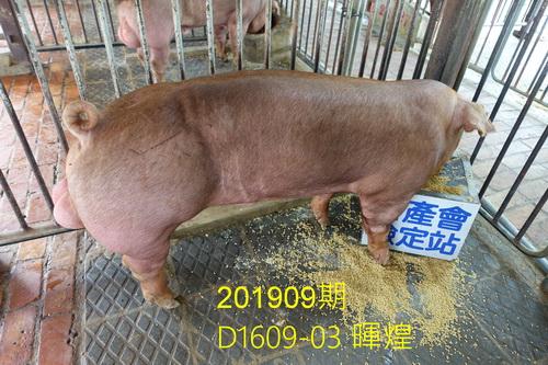 中央畜產會201909期D1609-03拍賣照片