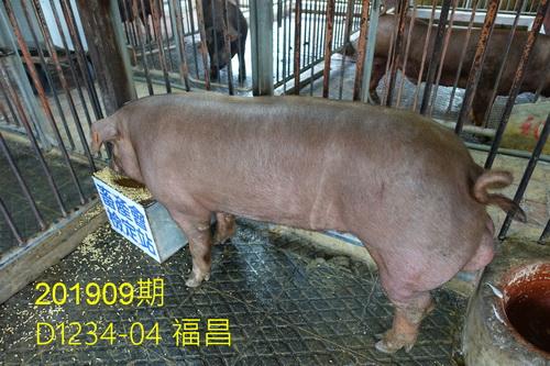 中央畜產會201909期D1234-04拍賣照片
