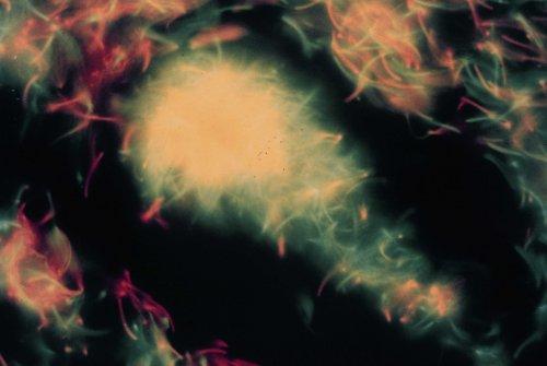 番鴨精子的冷凍(生殖細胞的冷凍p40)