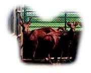 台灣的畜產種原(生殖細胞的冷凍p7)