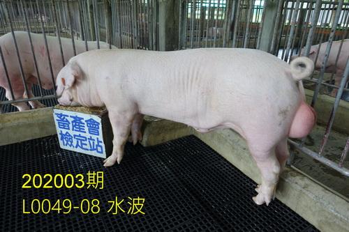 中央畜產會202003期L0049-08拍賣照片