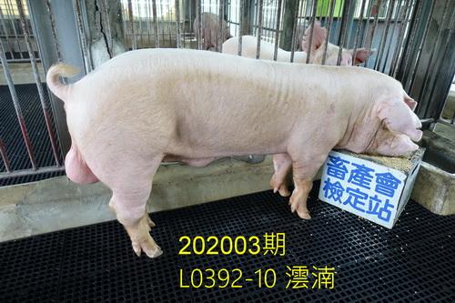 中央畜產會202003期L0392-10拍賣照片