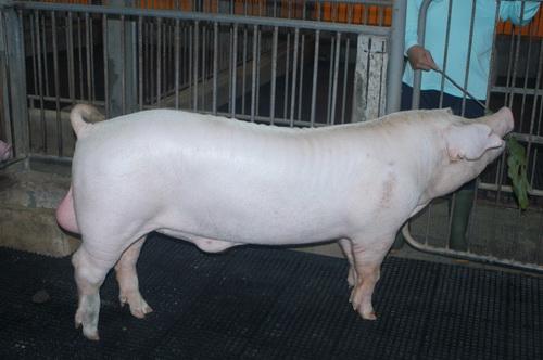 中央畜產會202003期L0392-10體型-全身照片