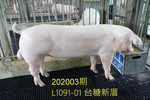 中央畜產會202003期L1091-01拍賣照片