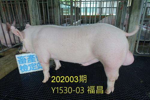 中央畜產會202003期Y1530-03拍賣照片