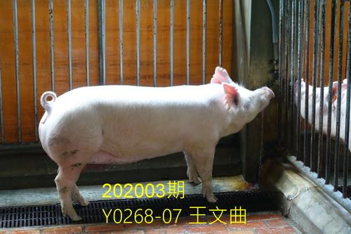 中央畜產會202003期Y0268-07拍賣照片