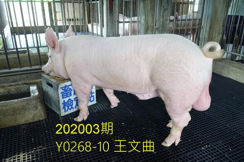 中央畜產會202003期Y0268-10拍賣照片