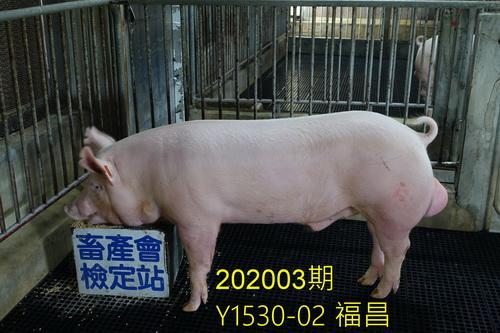 中央畜產會202003期Y1530-02拍賣照片