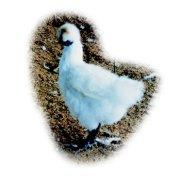 台灣的畜產種原(生殖細胞的冷凍p8)