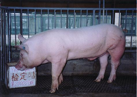 中央畜產會200007期Y0068-03拍賣照片