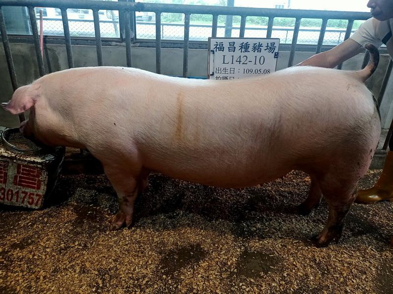 台灣區種豬產業協會11003期L0142-10側面相片