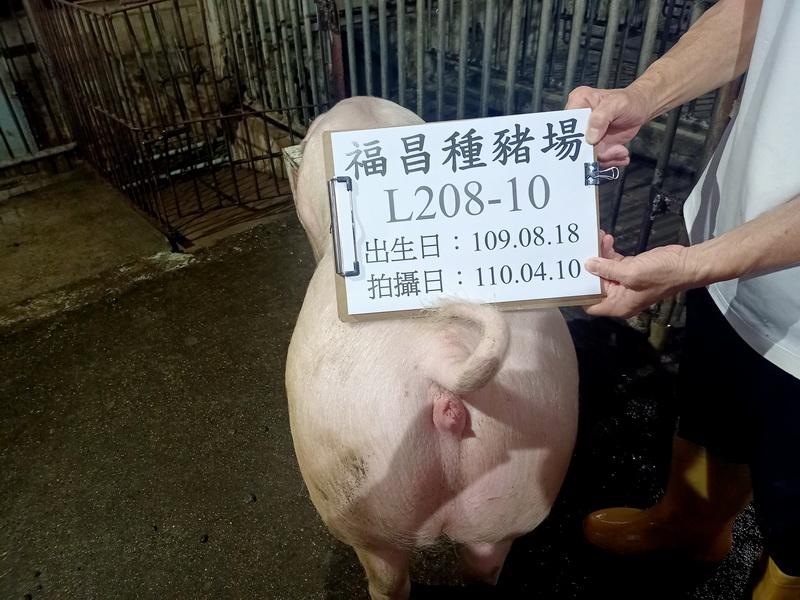 台灣區種豬產業協會11003期L0208-10後側相片