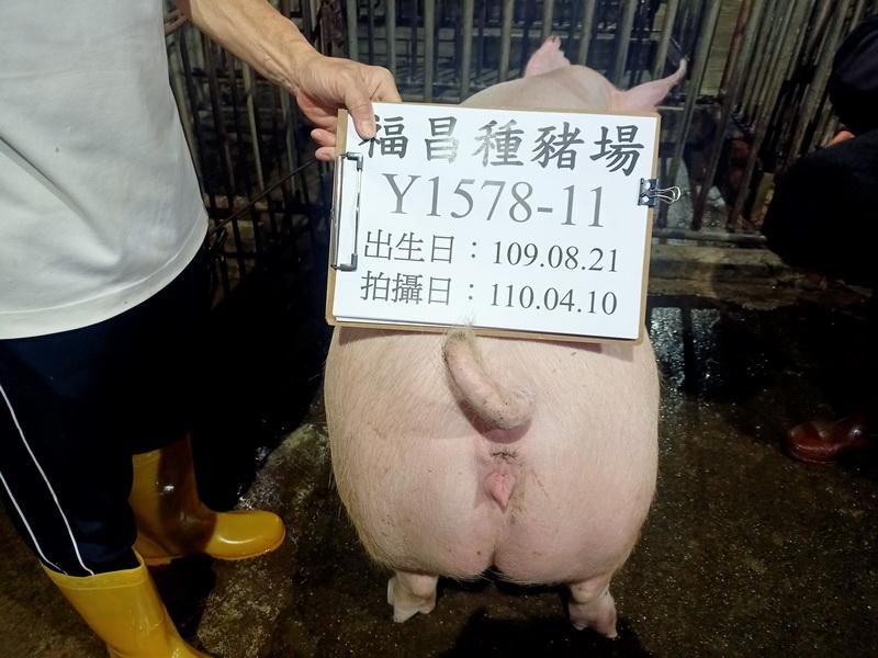 台灣區種豬產業協會11003期Y1578-14後側相片