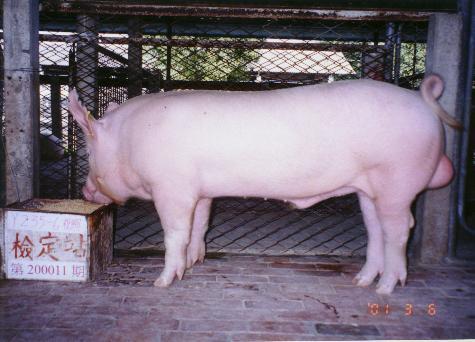 中央畜產會200011期Y0235-06拍賣照片