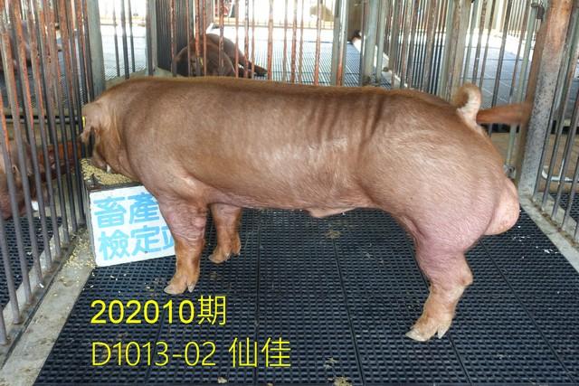 中央畜產會202010期D1013-02拍賣照片