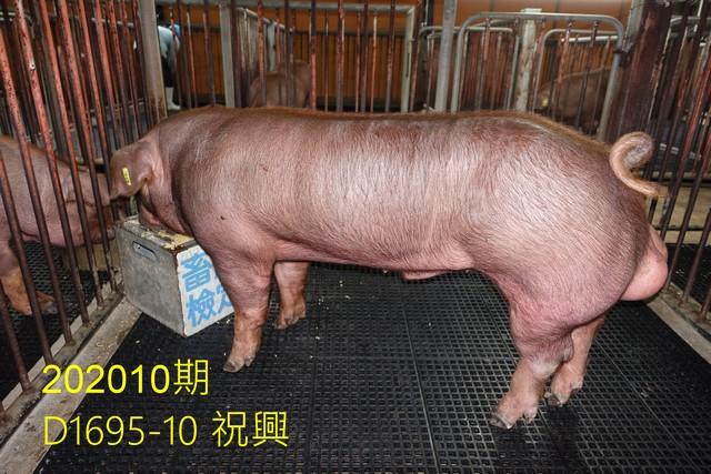 中央畜產會202010期D1695-10拍賣照片