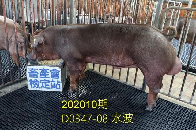 中央畜產會202010期D0347-08拍賣照片