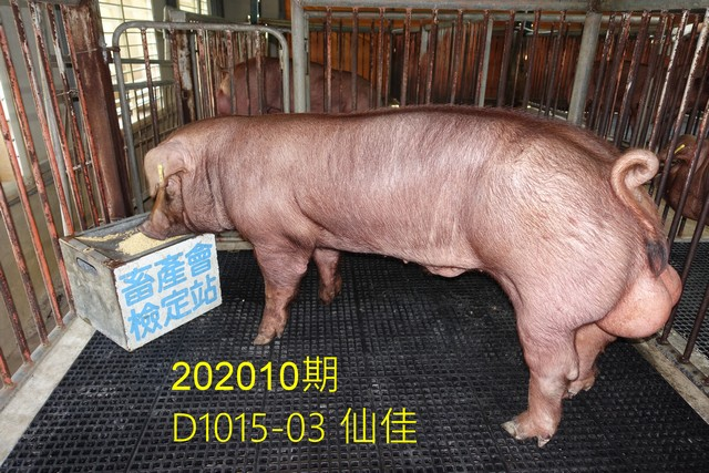 中央畜產會202010期D1015-03拍賣照片