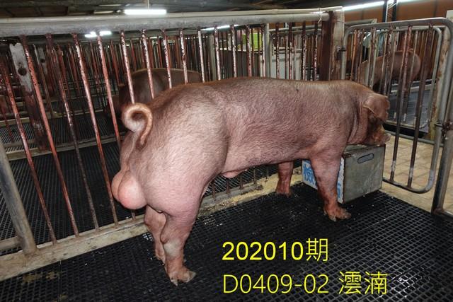 中央畜產會202010期D0409-02拍賣照片