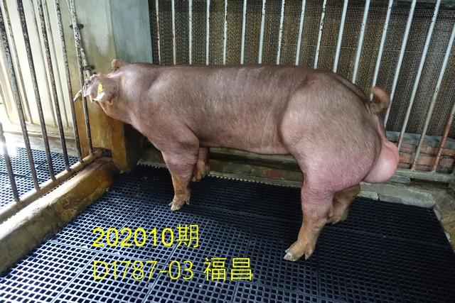 中央畜產會202010期D1787-03拍賣照片