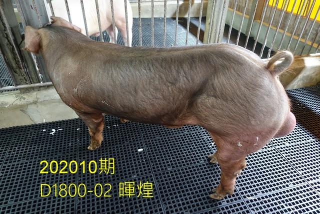 中央畜產會202010期D1800-02拍賣照片