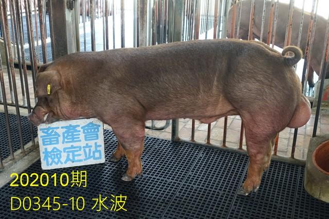 中央畜產會202010期D0345-10拍賣照片