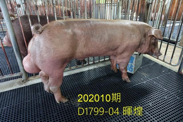 中央畜產會202010期D1799-04拍賣照片