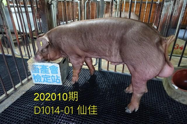 中央畜產會202010期D1014-01拍賣照片