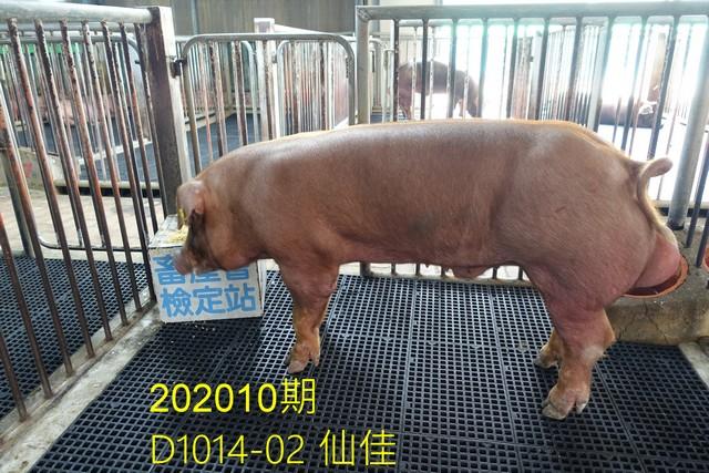 中央畜產會202010期D1014-02拍賣照片