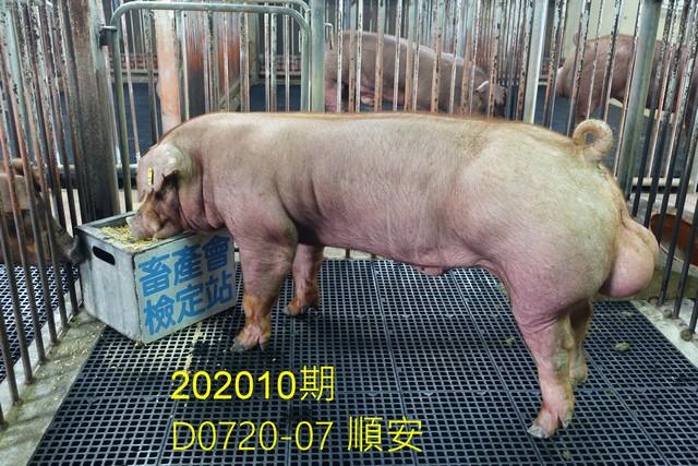 中央畜產會202010期D0720-07拍賣照片