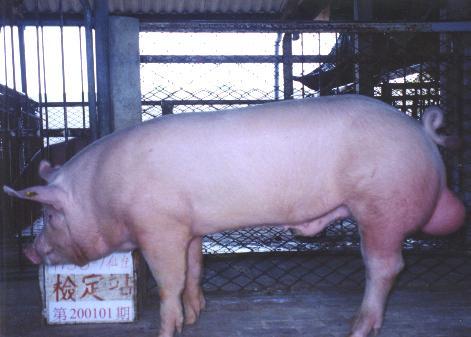 中央畜產會200101期Y0158-01拍賣照片