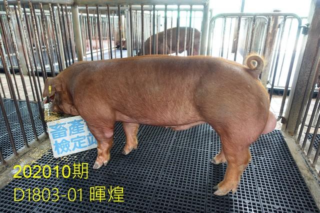 中央畜產會202010期D1803-01拍賣照片